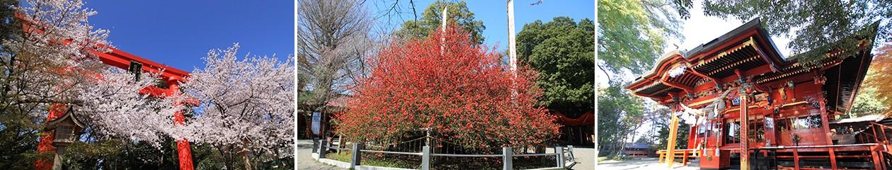 冠稲荷神社ブログ