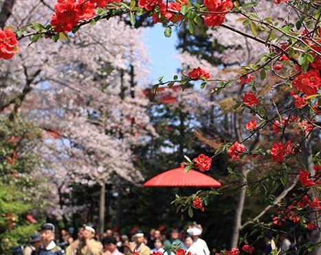 春は暖かな日差しと花々の競演に心がウキウキします。真赤な木瓜の花。ピンクの桜の花たち。白い雪柳…。 冠稲荷神社で結婚式を挙げる花嫁さんも、競演に仲間入り。晴れやかな笑顔はどの花にも負けない事でしょう!! そして、春の宵に挙行される「かがり火挙式」はとても幻想的。 木瓜も良し。桜も良し。春の宵はさらに良し💖