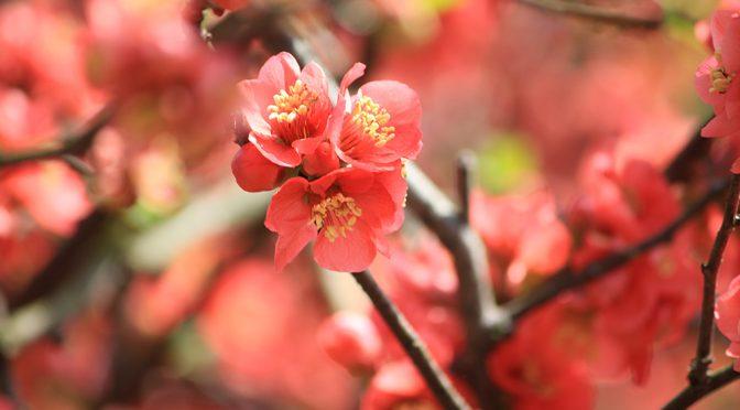 【春満載!!初午大祭特集】3/22に開催されます初午大祭についてご紹介♡