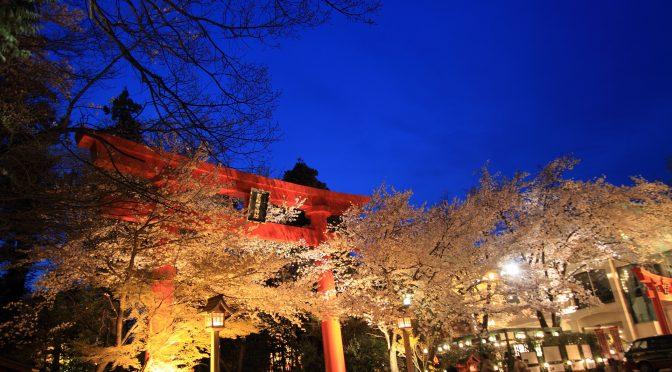 【自然豊かな冠稲荷神社の境内】桜舞う春と涼しい木陰の夏☆