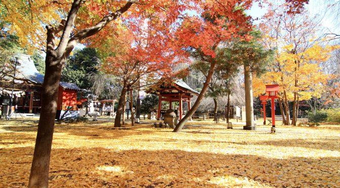 【秋のフォトウェディング✿】今の境内の様子を大特集