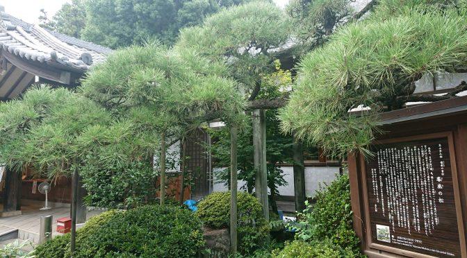 8月も中旬に入りますので9月の縁守りに入れる「彦九郎の松」を収獲してきました!丁寧に心を込めて奉製致しますので9月を楽しみにしていてください♪