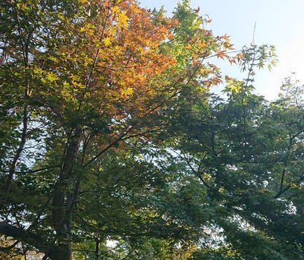 休日にお寺に行ってまいりました。綺麗な紅葉と相まって素敵なお寺でした。冠稲荷神社の境内も紅葉が始まっています♪