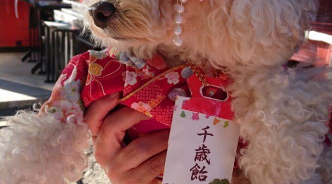 本日は戌の日!安産のご祈祷にたくさんの方がご来社くださいました。「犬の日」でもあるのか可愛らしいワンちゃんたちにもご来社頂きました♪