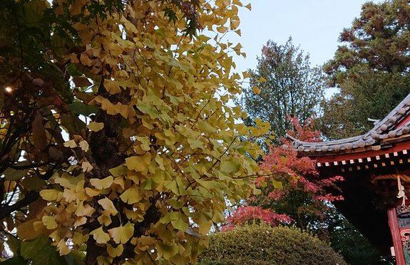 本日は大安でしたがのんびりとした境内でした。12月の縁守は境内の紅葉です。紅葉にも種類があるのはご存知ですか?