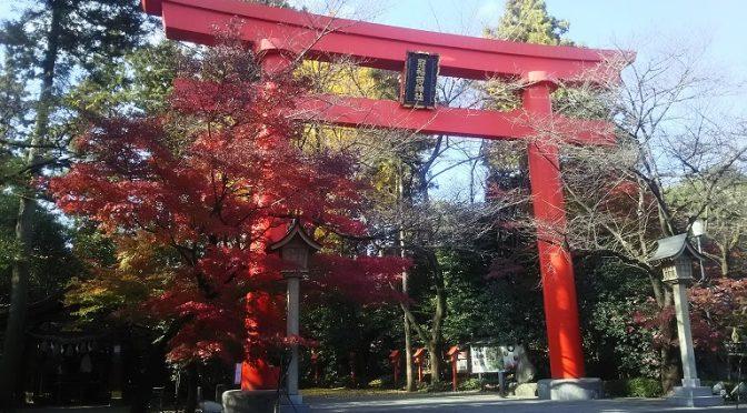 冠稲荷神社より境内の紅葉情報をお届けいたします♪そして、昨日・本日と2組の新郎新婦様が大前神前結婚式を執り納められました❤
