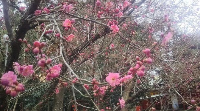 立春から数えて15日目の本日2月19日、二十四節気では「雨水(うすい)」にあたります。雨水ぬるみ草木が芽生える、という意味だそうです。実際に春の暖かさを感じられるのはまだまだ先ですが、境内の樹木の蕾の膨らみや地面からひょっこり顔を出し始めた新芽を見ますと、自然の方が人間よりも敏感に季節の変化を感じとっていることを実感いたします^^