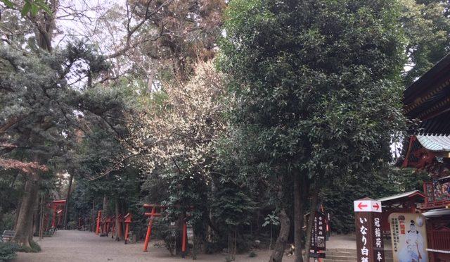 本日少し空気が冷たいですね。二月もあと二日で終わりです。三月になれば木瓜の花も見頃になるかと思うと、今から楽しみです。