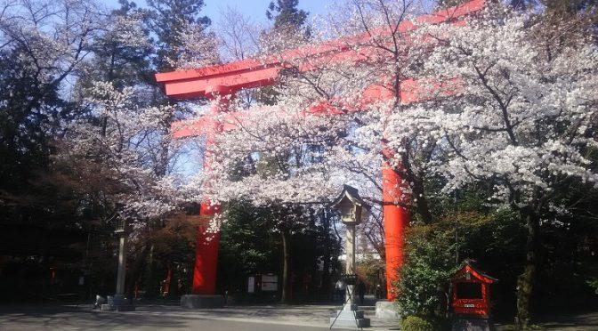本日4月3日は旧暦で「三の午」です。大安吉日でもあるお目出度い日でしたので、日中はご祈祷をはじめ、七五三や挙式の前撮り、そしてお花見のお客様で賑わいました♪