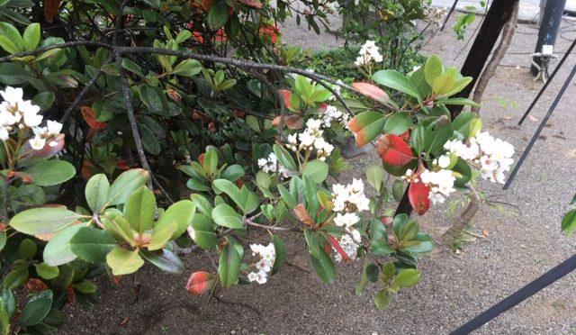 菅原社の手前にある金木犀の木の下を通ったところ、ほのかに甘い香りが漂ってきました。まだ金木犀の時期ではないと思いつつも、早くあの金木犀の香りを楽しみたくなりました。そして、可愛らしいお客様がお参りに来ていました!