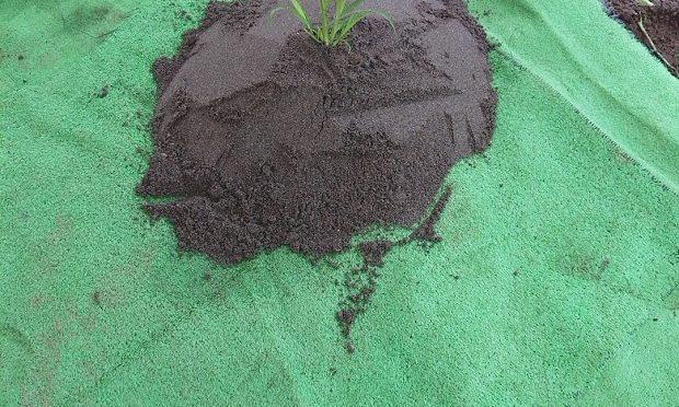 本日から立冬までは、秋の土用です。夏以外にも土用はあります。