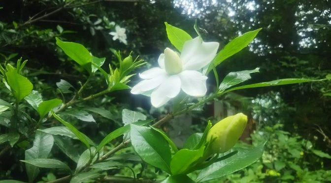 久しぶりの晴天!梅雨の晴れ間に太陽の光を浴びて境内の新緑や瑞々しい花々が眩しいくらいに輝いていました♪そして、来月の土用の丑の日に向けてご用意いたします、国産種うなぎや秘伝のタレ、つやつやのコシヒカリなど、美味しさにこだわった「開運 うなぎ弁当」のお知らせです!