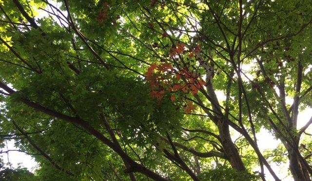 本日はとても暑い日ですね。六曜では仏滅となっており、良くない日とされておりますが、実は一粒万倍日と天赦日などが重なった一年で一番いい日です(#^.^#)
