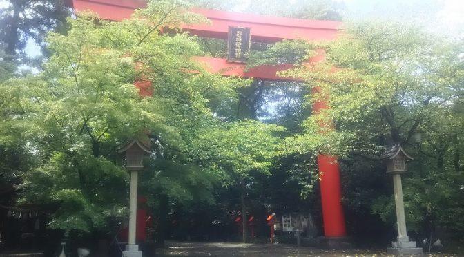 久しぶりに甲大鳥居を撮影いたしました^^ 桜も紅葉も青々と茂っております。春の桜、秋の紅葉も美しいのですが、真夏の緑も生命力に溢れていて良いものですネ♪春夏秋冬、四季をとおして冠稲荷の境内には美しく豊かな自然がいっぱいです。休日はもちろん、通勤前の朝やお昼休み、帰宅前の夕方など…いつでも、どうぞお気軽にお立ち寄りください。