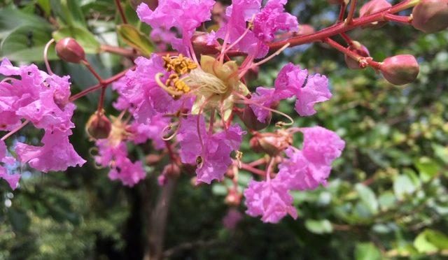 朝から雨が降っていましたね。午後になると雨が止み、蝉たちの元気な声が聞こえてきました。秋も近づき、花が終わりの植物も多くなってきました。そのかわり、果実や種子ができてきております。
