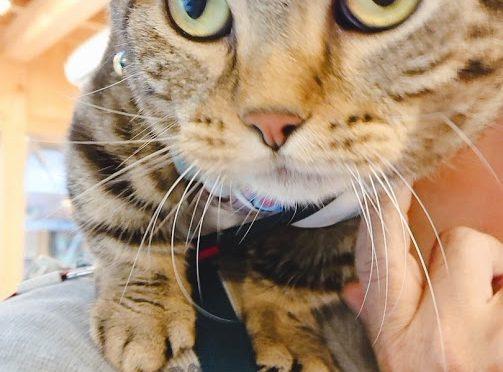本日のブログは昨日ご来社頂きました可愛いゲスト猫ちゃんたちをご紹介したいと思います!!実は猫ちゃんと神社って関係が深いんです(*>U<)少しご紹介いたします♪