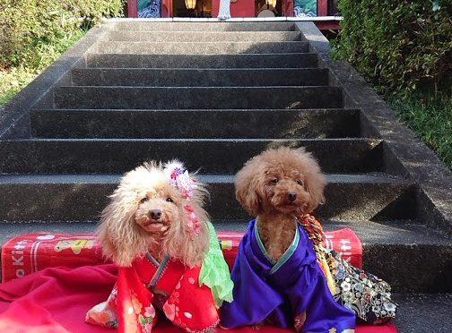 境内の紅葉たちの色づきも深まる中、今日の冠稲荷神社は平日にも関わらず七五三のお参りと観光のお客様で賑わいました♪ありがとうございます!