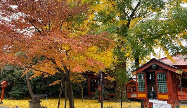 本日は日中でもとても寒かったですね。昨日の風の影響もあり、銀杏でできた黄色い絨毯が境内を彩っております。本日は今月の神様朱印のモチーフである神倭磐余毘古神についてご紹介致します。