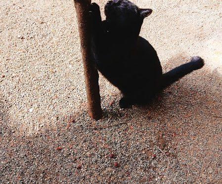 今日は2月22日、「にゃん(2)にゃん(2)にゃん(2)」で「猫の日」です!じつは告知はしておりませんでしたが「冠稲荷神社」の御朱印(丸文字)に猫ちゃんが入っておりました♪