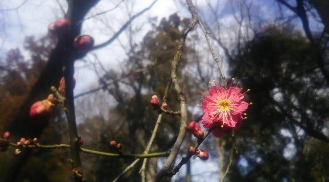 本日2月4日は立春♪暦の上では春となり、旧暦では一年の始めとされていたため、季節の節目は本日が起点となっております。また、「大安×一粒万倍日」でもある本日は大吉日♪諸事成功を願って事始めに用いられたり、入籍日や結婚式日としても人気の日です♪