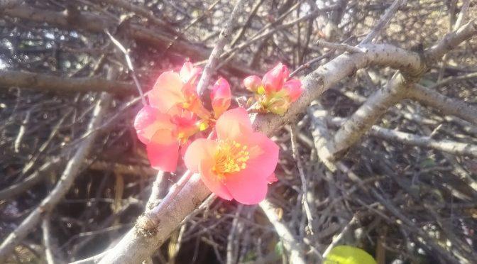 ここ数日ほど暖かい日が続き、境内の花が次々と咲き始めました♪風はまだ冷たいものの、冠稲荷神社の境内は一足先に春のワクワク感に包まれております(^^)