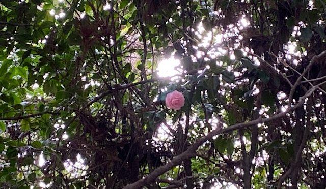 境内にはいろいろな鳥さんが遊びに来てくれます。昨日は雀さんが木瓜の花まで遊びに来ておりました。もう少し暖かくなったら、花が増えたらめじろっちが遊びに来てくれるでしょうか?楽しみですね。