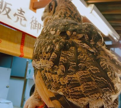 本日は雨天でしたが、御朱印を受けにかわいいお客様がいらっしゃってくださいました!鳥さんの羽は意外と水をはじくのだそうですよ!スゴイですね!