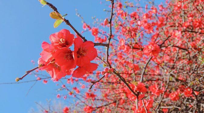 今日は朝からうぐいすが境内に鳴き声を響かせていました!可愛い声が春を教えてくれているようです♪