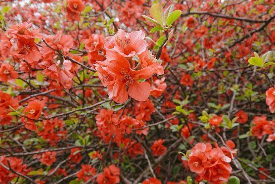 昨日は春の雪で身体の芯まで冷え込みました。境内の桜や桃たちもまだ元気に咲いています!