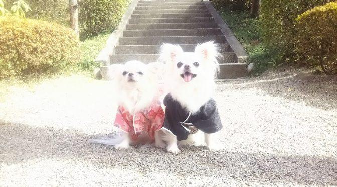 麗らかな春の日♪可愛らしいワンちゃんと飼い主様が七五三祈祷にご来社くださいました(^^)