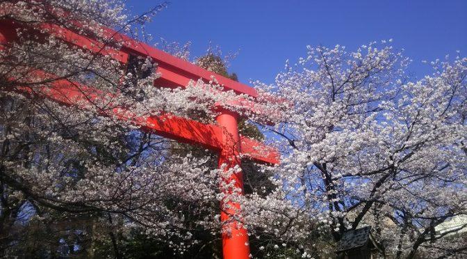 春爛漫♪桜、木瓜、桃、雪柳…。冠稲荷の境内では色とりどりの花々が咲き乱れております(^^)