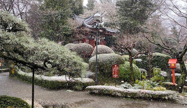 本日、雪が降りましたね。桜と雪のコラボレーションもとても素敵でした。