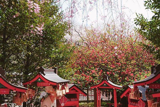 皆さまは桜にまつわる言葉をご存知でしょうか?実咲社前の枝垂れ桜は開花を始めました♪