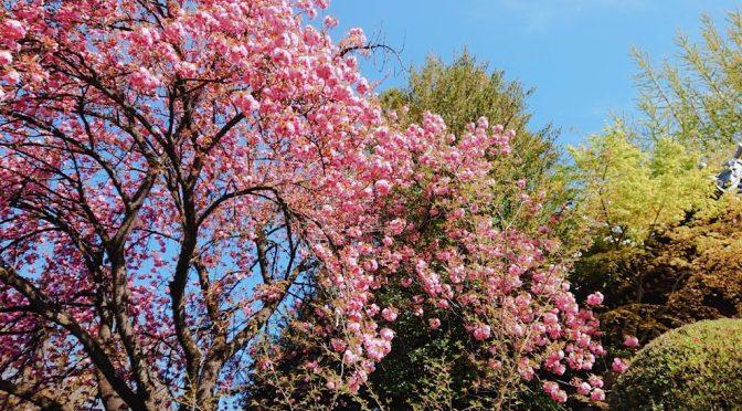 自粛ムードも壊せるように今日も境内のお花の写真をお届け致します!