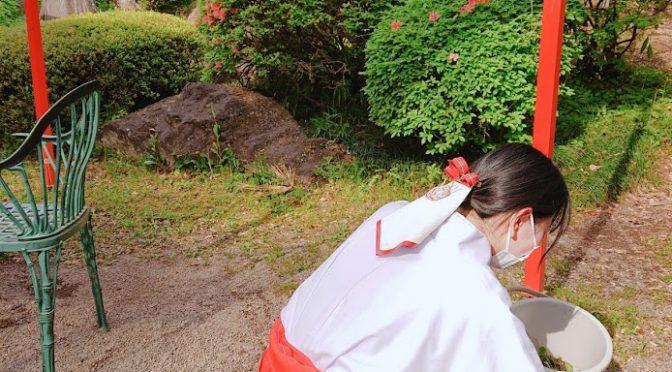 昨日から始まっておりますステイホーム週間、神社は見事な晴天に恵まれました!