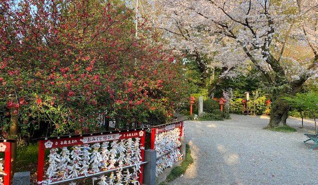 昨日は健康長寿祈願祭が執り行われました。本日は強い風の影響で桜の絨毯ができておりました。