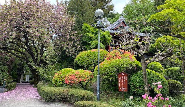 本日は出張神事に随行させて頂きました。境内には春に咲いた花が散り、実をつけ始めております。