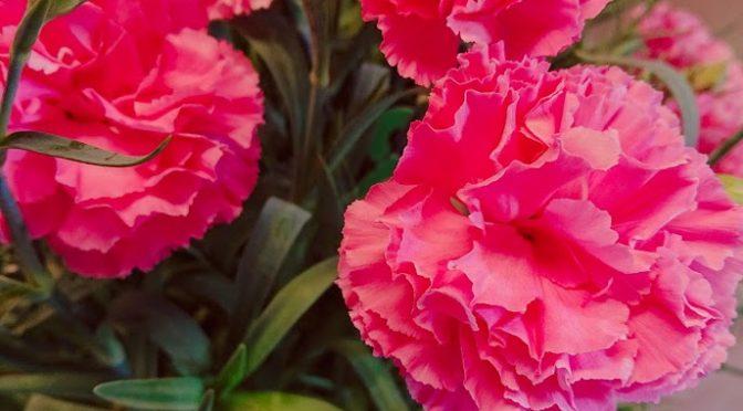 雨天のときこそ明るい色の花を見ると元気になりますね!!