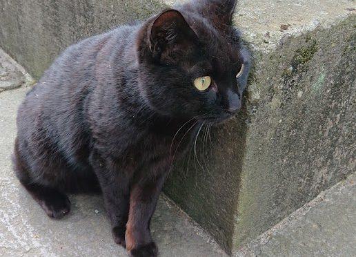 今日は朝から黒にゃんに会えました!最近はちょくちょく顔を出してくれているようです(笑)