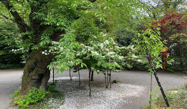 みどりの日」タグが付いた記事一覧|冠稲荷神社ブログ