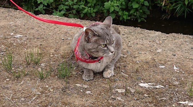 先日行った地鎮祭にかわいい猫ちゃんが参列してくださいました♪