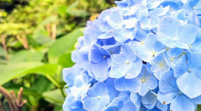 いろんなお花がちらほらと…✿本日は境内にあるお花をご紹介したい致します♪