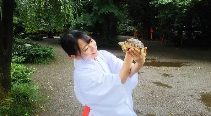 本日は七福神殿と八坂社についてとかっこいいお客様をご紹介致します✿