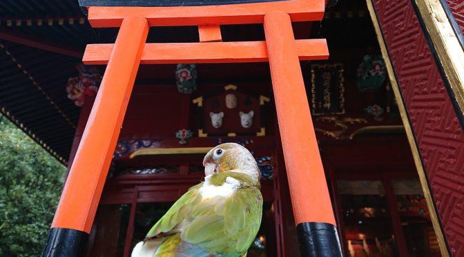 今日は朝から色が可愛い小鳥さんがお参りに来てくれました!