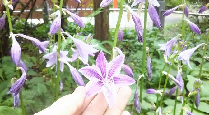 夏の花が鮮やかに咲く、冠稲荷神社♪様々な願種の御祈祷を随時、承っております。