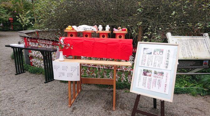 本日は木瓜の木の前で木瓜の実収穫祭が執り行われました。