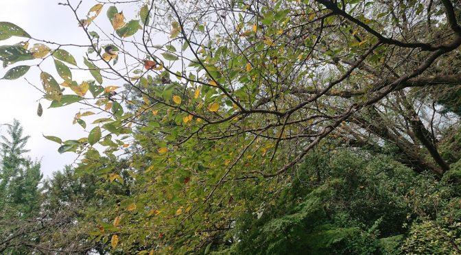 明日は彼岸入りです。境内も朝晩は秋の涼しい風が吹いています。