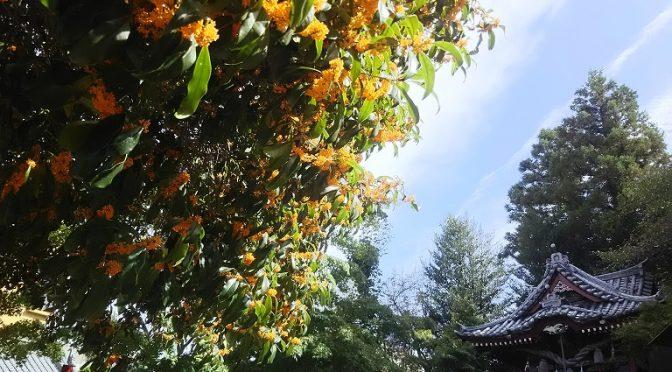 清々しい香りの金木犀に可愛らしいアベリアの花、モミジの紅葉…境内では年間を通して美しい自然をご覧いただけます♪