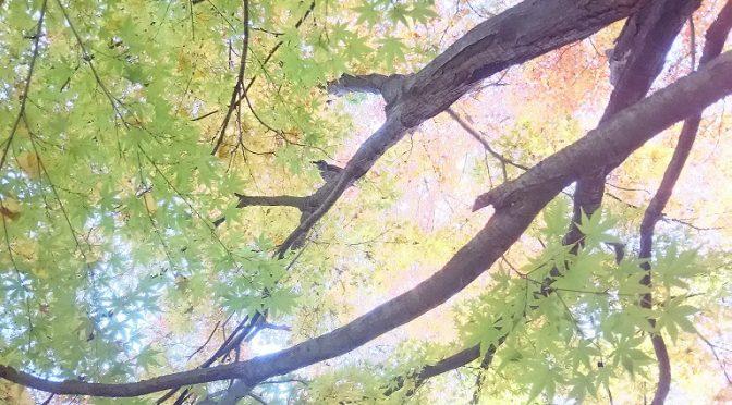 慌ただしい師走にホッと一息つける宮の森♪どうぞお気軽にお越しください(^^)