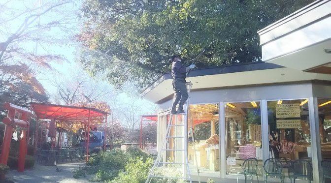 (株)東園芸さんが松や金木犀のお手入れを行ってくださいました♪
